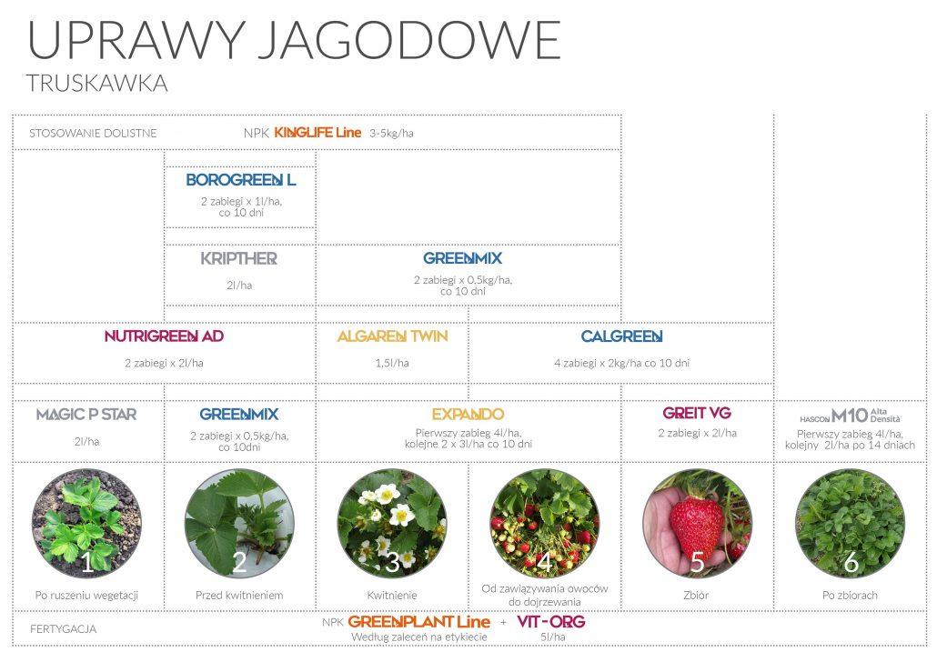 program nawozeniowy uprawy jagodowe truskawka